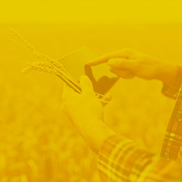 Agriculture  Consultancy